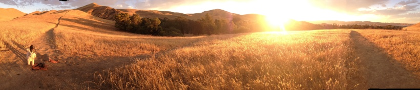Astoundingly beautiful golden California hills at sunset.