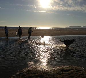 6 BeachDog