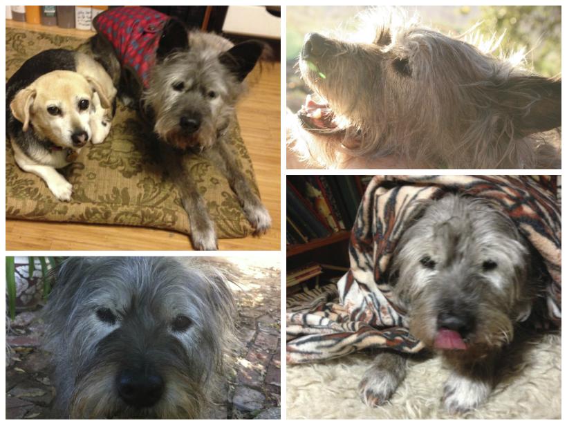 Series of dog portraits